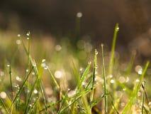 Morgondagg på gräs Fotografering för Bildbyråer