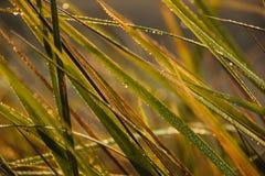Morgondagg på gräs, sidor och filialer på morgonhöstsoluppgången Royaltyfria Foton