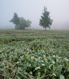 Morgondagg på gräset i th parkerar Fotografering för Bildbyråer