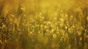 Morgondagg på gräset Solen stiger arkivfilmer