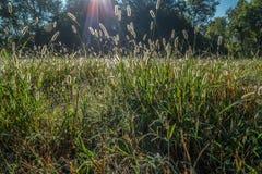 Morgondagg på högväxt gräs royaltyfri bild