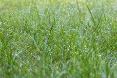 Morgondagg på nytt grren gräs i trädgården arkivbild
