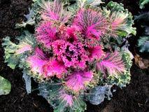 Morgondagg på växter Arkivfoton
