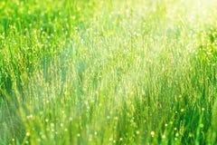 Morgondagg som är upplyst vid solljus Arkivfoto