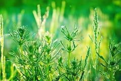 Morgondagget på gräset i skogen. Arkivfoto