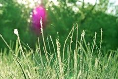 Morgondagget på gräset i skogen. Arkivbild