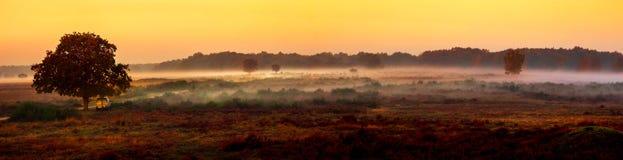 Morgondimma över heathlanden royaltyfri bild