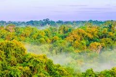 Morgondimma över regnskog i Colombia Arkivfoton
