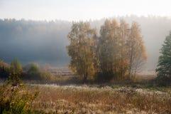 Morgondimma i september Landskap F?lt och skog royaltyfri bild