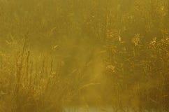 Morgondimma i sjön Royaltyfria Bilder