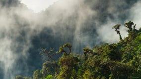 Morgondimma i tät tropisk rainforest royaltyfria bilder