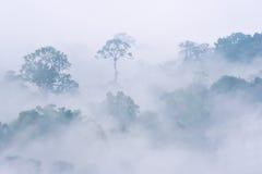 Morgondimma i tät tropisk rainforest arkivbild