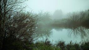Morgondimma på en sjö arkivfoto