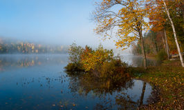 Morgondimma på sjön royaltyfri bild