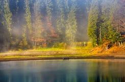 Morgondimma på sjön i prydlig skog Arkivfoto