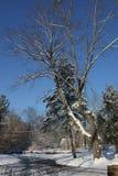 Morgonen efter den första snön Arkivfoton