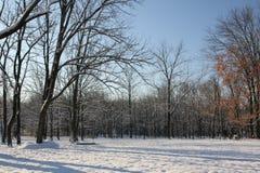 Morgonen efter den första snön Arkivfoto
