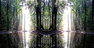 Morgonen efter regn i den ljusa misten för skog A och en ljus sol reflekteras Royaltyfri Bild