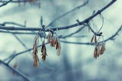 Morgonen fryste Royaltyfria Bilder