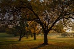 Morgonen går soluppgång på en golfbana royaltyfri fotografi