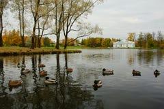 Morgonen i Oktober, går till och med Catherine Park Arkivfoto