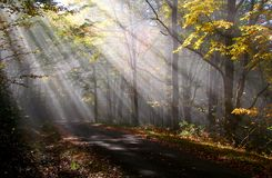 morgonen rays sunen Arkivfoto