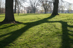 morgonen shadows treen Royaltyfria Foton