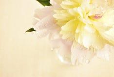 Morgonfriskhet Royaltyfria Foton