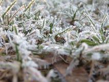 Morgonfrost Royaltyfri Fotografi