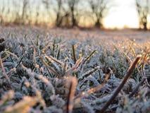 Morgonfrost Arkivbilder