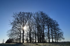 Morgonfrost i England. royaltyfri fotografi