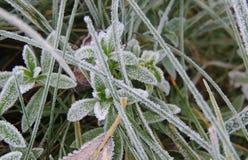 Morgonfrost på det gröna gräset på sikten för solig morgon för vinter den bästa Royaltyfri Fotografi