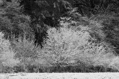 Morgonfrost på kala träd arkivfoto