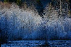Morgonfrost på kala träd arkivbilder