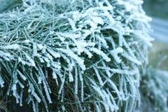 Morgonfrost på sidor av gräs Arkivbilder