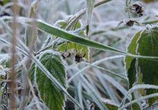Morgonfrost på växterna på sikten för solig morgon för vinter den bästa Royaltyfri Bild