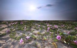 Morgonhärlighet blommar på den Batu Buruk stranden Royaltyfri Foto