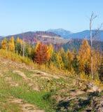 MorgonhöstCarpathians landskap Arkivfoton