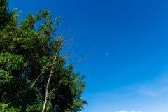 Morgonhimmel för måne utom fara royaltyfri foto