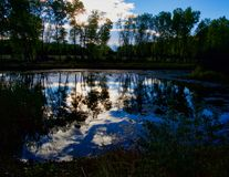 Morgonhimmelreflexioner på dammet arkivfoto