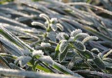 Morgonis på den gröna grodden på sikten för solig morgon för vinter den bästa Royaltyfria Bilder