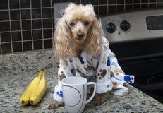 Morgonkaffe i köket Royaltyfri Foto