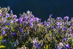 Morgonljus över vildblommorna Royaltyfria Foton