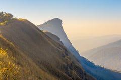 Morgonljus över vildblommorna Royaltyfri Foto