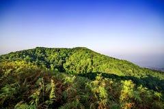 Morgonljus över vildblommorna Arkivbilder