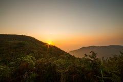 Morgonljus över vildblommorna Fotografering för Bildbyråer