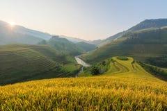 Morgonljus från ris på terrass på det Vietnam landskapet Royaltyfri Fotografi
