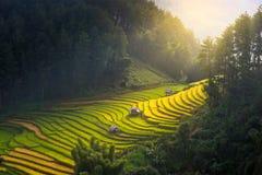Morgonljus från ris på terrass på det Vietnam landskapet Royaltyfri Foto