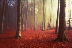 Morgonljus i dimmig skog Arkivbild