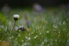 Morgonljus med en blomma royaltyfria bilder